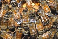 this image shows a busy hive